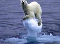 Fotos zum Klimawandel - Google-Suche