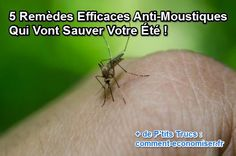West Nile Virus Confirmed In Contra Costa County Vector Control, Mosquito Repelling Plants, Landscaping Tips, Peppermint, Health Fitness, Positivity, Officiel, Voici, Diy