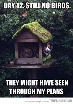 baaahaha stupid kitty....this is so funny!!!!