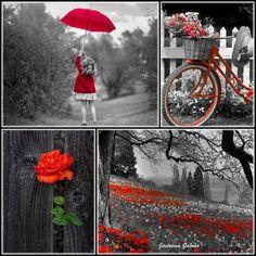 Colorido em destaque - Red