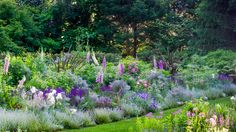 Lavender, nepeta, pink foxglove and white iris | Global Light Minds