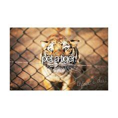 before i die | Tumblr, found on #polyvore. bucket list #bucketlist #pictures before i die
