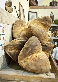 Altamura traditional bread