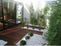 juncos en patio interno