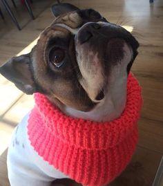 Hundeloop Loop Neon Dog Scarf Bandana handgestrickt Französische Bulldogge Schal  | eBay