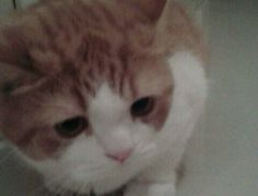 My cat Fozy. He's almost 2 years old