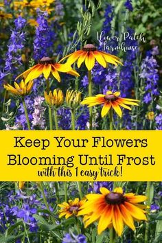 house flower garden 39265827987322961 - Want to know the secret to beautiful long lasting blooms in your garden all Summer long. Even up until first frost? I show you step by step how easy it is with basic tools. Source by empressofdirt Gardening For Beginners, Gardening Tips, Gardening Books, Container Gardening, Kitchen Gardening, Gardening Supplies, Growing Flowers, Planting Flowers, Flower Gardening