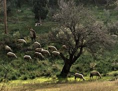 the shepherd Photo by Kostas Makris — National Geographic Your Shot