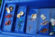 Sensory Table- Sea/ Ocean - Lobsters with shells and water Sensory Table, Lobsters, Sea And Ocean, Ocean Life, Fun Projects, Shells, Water, Conch Shells, Gripe Water