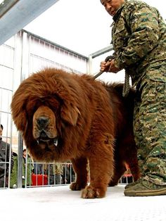 That is not a dog. It is a bear.