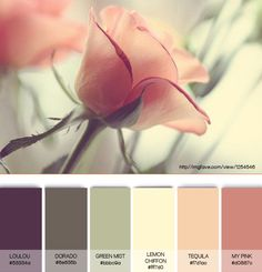 Rosie mist color palette and inspiration