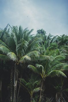 """The palm, what is not to love. Summer breeze, blue skies. #opusdesignco @opusdesignstore www.opusdesign.com.au   cleanandsupreme: """" cleanandsupreme.com for More. """""""
