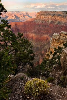 Grand Canyon - South Rim /// I would love to see this all again. It was so worth the drive. It's beautiful.