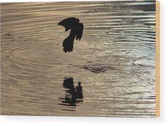 Bird Wood Print featuring the photograph Bird Silhouette by Cynthia Guinn