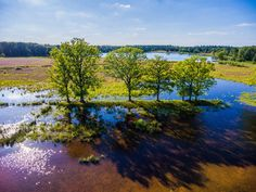 Nieuw in mijn Werk aan de Muur shop: Galderse Heide, Mastbos Breda, The Netherlands - Aerial Shot - Summer Air Drone, Dji Phantom, Holland, Shots, Sky, Canvas, World, Water, Prints