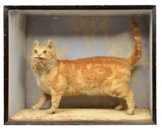 "A stuffed and mounted ginger cat, a mouse in its jaws, to the side a handwritten label: ""Champion Mouser From Hampshire, Taxidermy by Moudy`s of Romsey, Killed By Combine At End Of Harvest, Much Mourned Hence Preserved"""