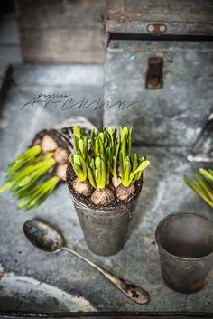 Paulina Arcklin Photography + Styling | SPRING