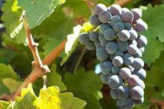 Resultado de imagen para chilean wine Chilean Wine, Fruit, Food, Hoods, Meals