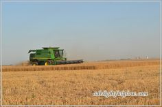 For amber waves of grain...