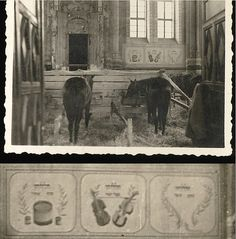 German horses stabled in a Polish Synagogue. The Germans never tired of seeking new ways to desecrate and debase all things that the Jews found Holy.