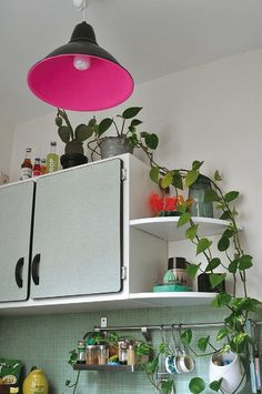 Bohemian Homes: Kitchen detail  plants & neon pink