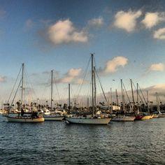 The calm marina at San Diego. Photo courtesy of billnes on Instagram.