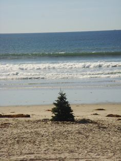 Christmas on the beach! | #christmas #xmas #holiday #food #desserts #christmasinjuly