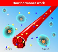In this post, we're going to dive into one of the most important hormones in your body... and why it's usually depleted in people…