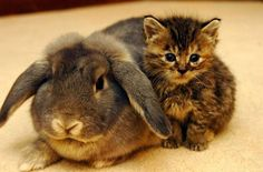 Dogs and Cats and Bunnies, Oh My!  The most squeal-worthy photos of bunnies—with dogs and cats—that we could find!