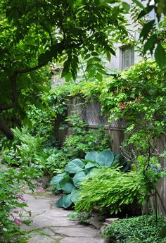 More Ideas for the Narrow Garden Between Suburban Homes