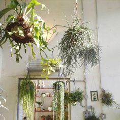 conservatory-archives-london-shop-hanging-plants-staghorn-fern-houseplant-house-plants-gardenista