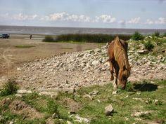 caballo. berazategui, argentina