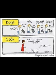 Dog's vs Cats