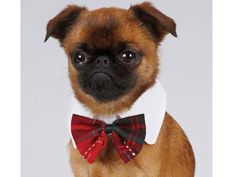 Dogs in Bowties! Ferrets in Berets! 20 Cute (& Crazy) Outfits to Buy for Your Pet