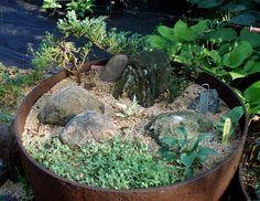 Idiots Avaunt 13 AHS Convention outdoor containers - Hosta Forum - GardenWeb