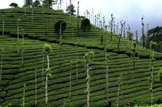 mysterious valleys at kerala  Awesome..