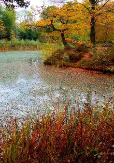 FUCKITANDMOVETOBRITAIN — Epping Forest, Essex, England, UK