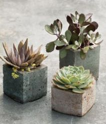 Cool centerpiece ideas using succulents