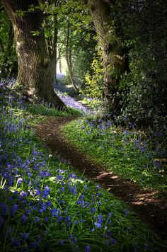 inspirationlane:Bluebell 02 (by Matt Oliver photography)