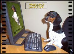Magellan explores everything  and is the mascot of everything-about-dachshunds.com