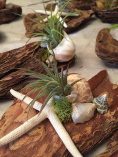 Driftwood parts offering oxygen plant life shells moss coral Driftwood Wall Art, Driftwood Beach, Driftwood Crafts, Driftwood Ideas, Oxygen Plant, Driftwood Centerpiece, Driftwood Planters, Succulent Planter Diy, Faux Succulents