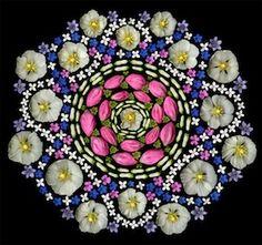 Flower Prints - Portia Munson