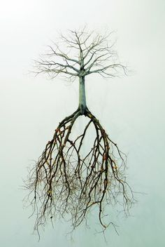 PHOTO BY: Saatchi Gallery, London © Jorge Mayet 2008 This is really amazing to see that the roots are actually larger than the tree!