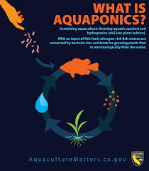 17 Best Aquaponics Infographics images in 2018 | Aquaponics
