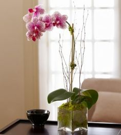Plants | Plant Delivery | 1800Flowers.ca