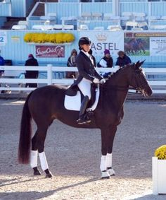 "Avant Garde - Stunningly elegant Dutch Prix St Georges mare. Judges comment on her Developing PSG test - I wanted my score ""70%"" to reflect the quality and ability of this horse. Second at Devon with PSG Test of Choice. A super horse that is a joy to work with. Sutiable AA, JR/YR or pro! $135,000"