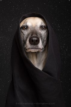 May the 4th be with you by Elke Vogelsang on 500px...dog