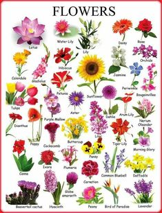 Learn English Vocabulary through Pictures: Flowers & Plants - ESL Buzz