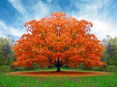 whatta tree