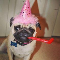 Happy birthday, little pug!
